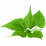 Home Remedies For Hair Growth - stinging nettle image