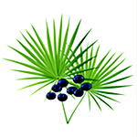 Herbs for hair growth - saw palmetto image