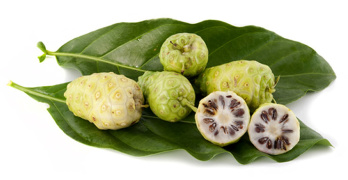 Noni juice benefits - article head image