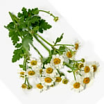 Natural Blood Thinners - feverfew image