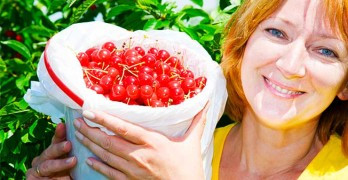 What Are The Tart Cherry Juice Benefits?