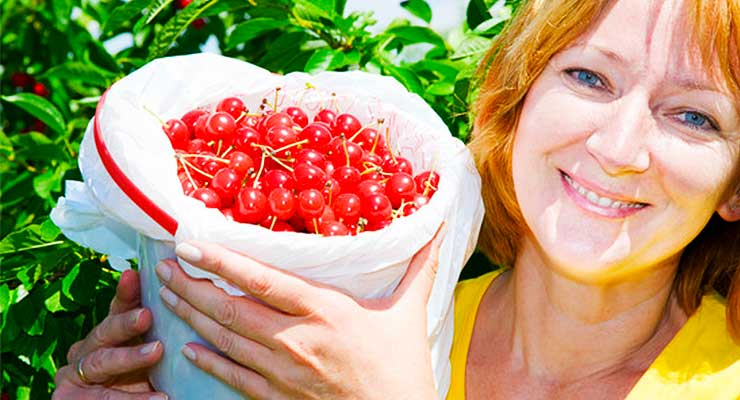 Tart Cherry Juice Benefits - article head image