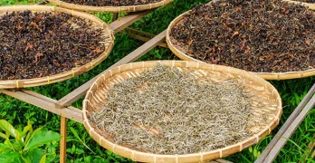 White tea benefits - article head image
