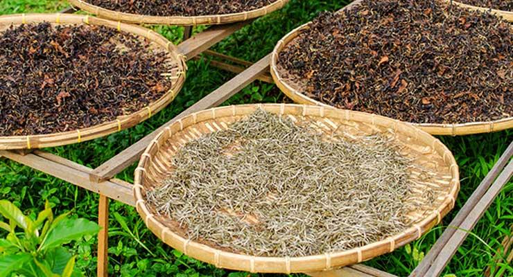 White tea benefits - article head image