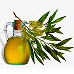 Tea Tree Oil - image