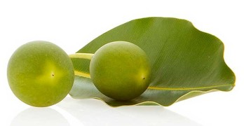 What Are The Benefits Of Tamanu Oil?