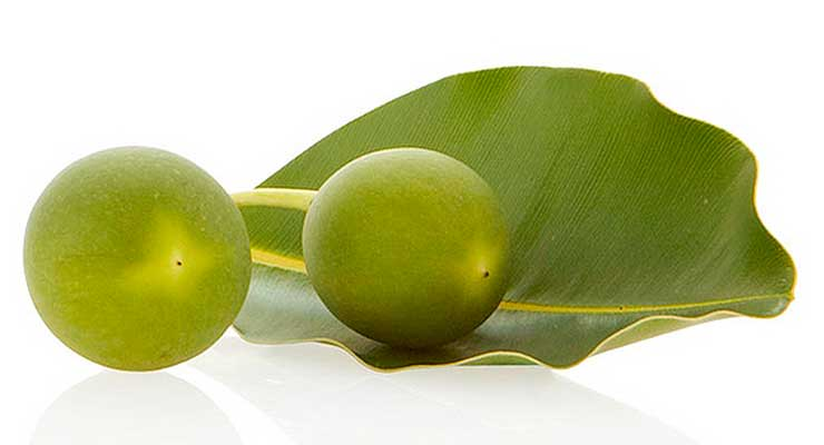 Tamanu Oil Benefits - article head image